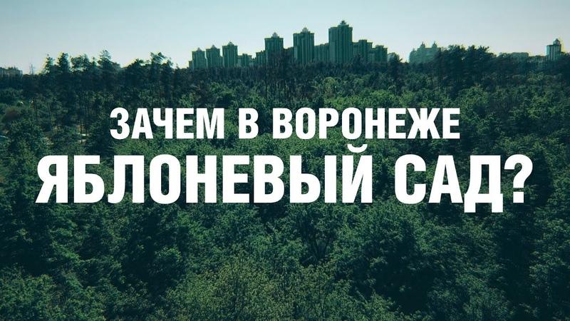 Воронеж Яблоневый сад Полная вырубка