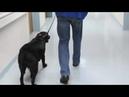 Мужчина хотел вернуть пса взятого в приюте Но передумал когда узнал кто был его хозяином