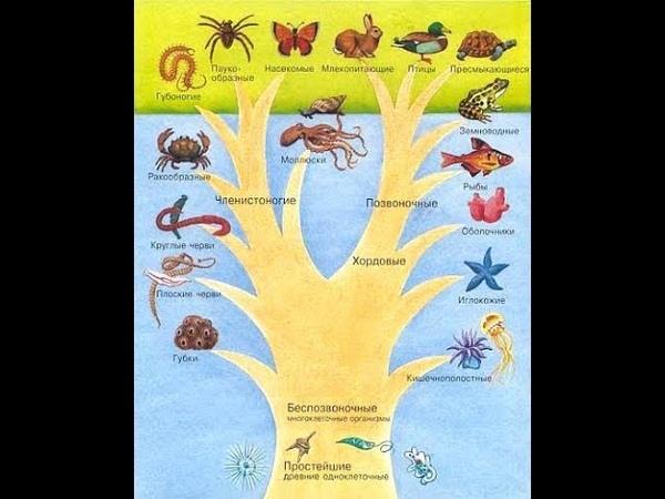Эволюционное древо человеческого разума.