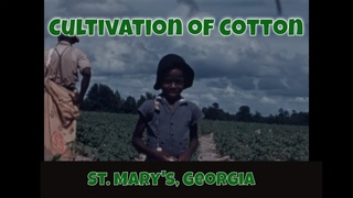 AFRICAN AMERICANS PLANTING, CULTIVATING & PICKING COTTON CROP  ST. MARY'S GEORGIA (silent) XD14024