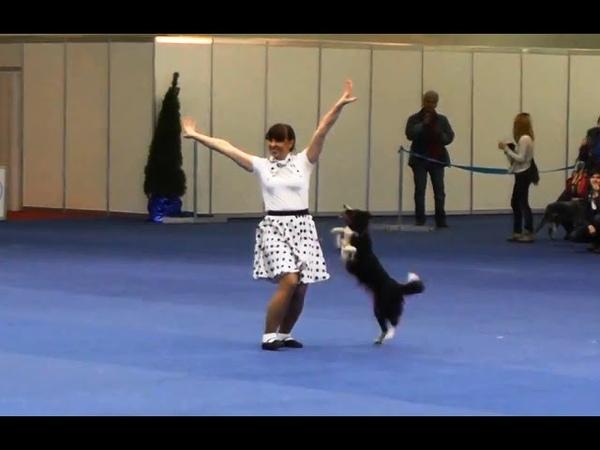 Танцы с собаками Кубок Мастеров 2013 Dog Dancing Canine Freestyle