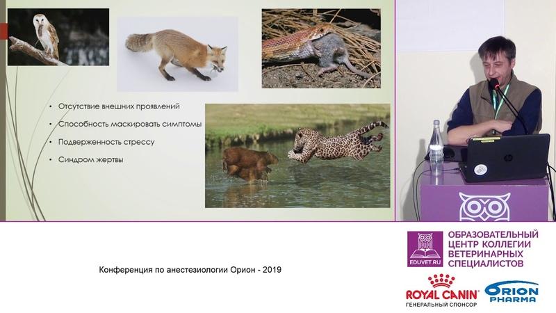 Гершов С О Особенности анестезии мелких экзотических животных