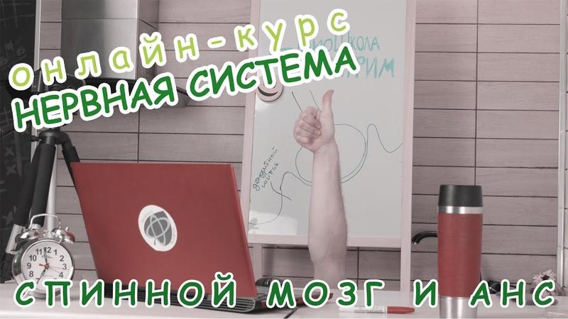 Серия 16 СПИННОЙ МОЗГ И АНС БиоШкола Пилигрим Даня Бобровский курс Нервная система