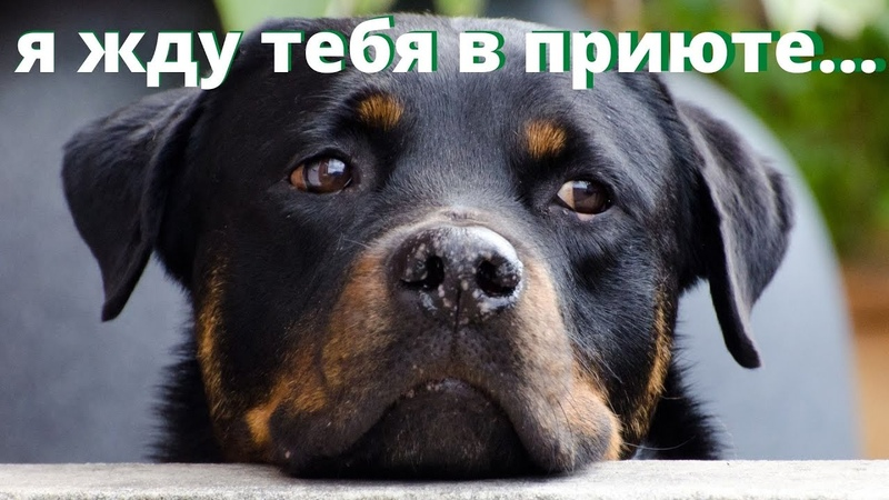 Приют для собак и кошек нужен городу Мытищи Сейчас животных увозят в Ярославскую область