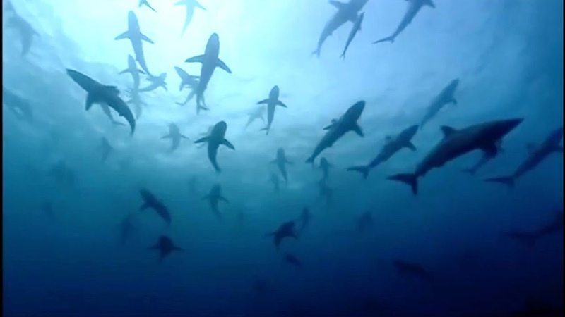 The Blue Planet Collection Part 1 BBC Earth