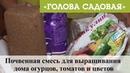 Голова садовая - Почвенная смесь для выращивания дома огурцов, томатов и цветов
