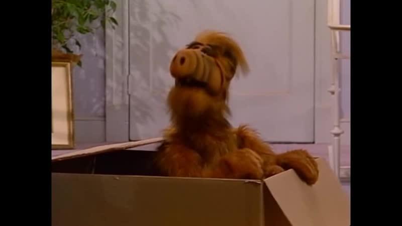 Alf Quote Season 1 Episode 15 Что