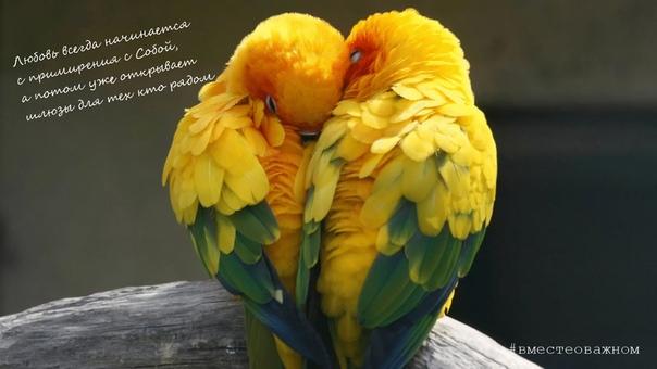 Любовь придает жизни и нашему существованию особый смысл