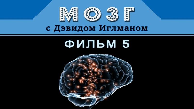 Мозг с Дэвидом Иглманом Зачем мне нужен ты Фильм 5 HD 720p