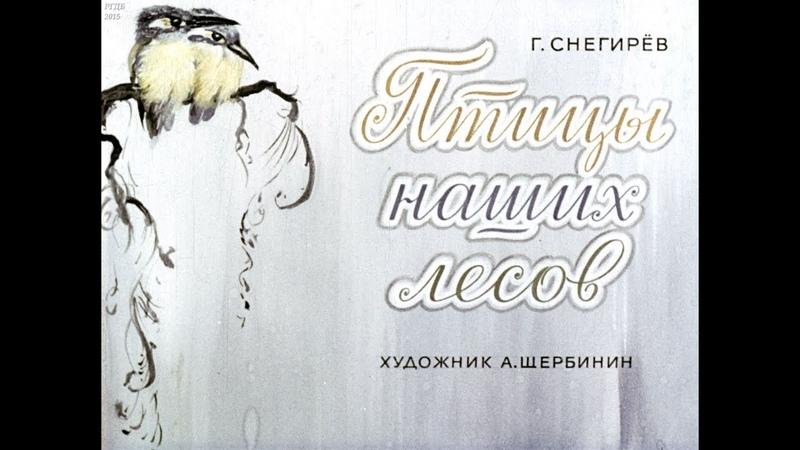 Диафильм Г Снегирев Птицы наших лесов
