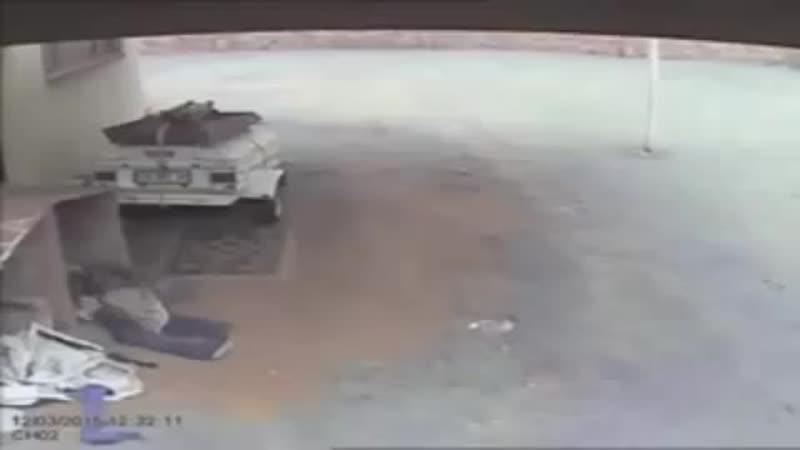 Фила атаковал вора