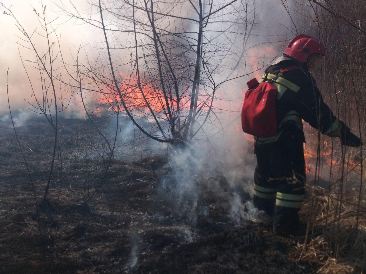 В Курске неизвестные подожги камыш. Чуть не сгорели жилые дома