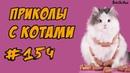 Приколы с котами - Смешные Кошки и Коты 2018 ДО СЛЁЗ