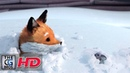 CGI **Award Winning** 3D Animated Short A Fox And A Mouse by ESMA TheCGBros