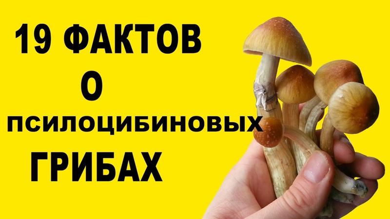 19 фактов о псилоцибиновых грибах
