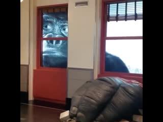 Необычная выставка Кинг Конга в Эмпайр-стейт-билдинг, креативный подход