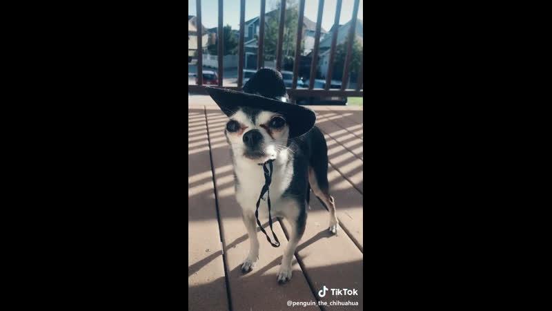 Little cowboy )
