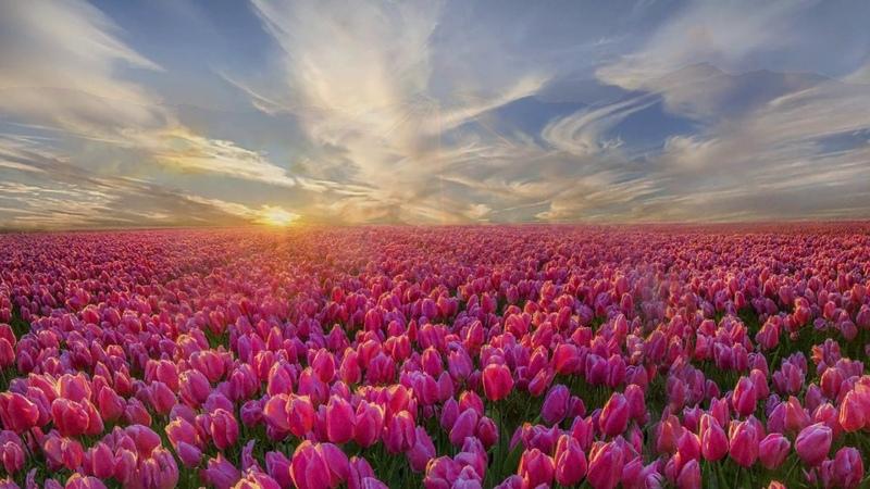 Красивая Музыка для Души - Море цветов / Beautiful Music for the Soul - Sea of Flowers