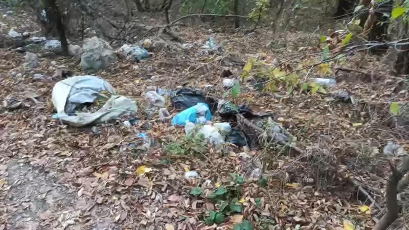 Эльдар Богунов в шоке от гряздного леса