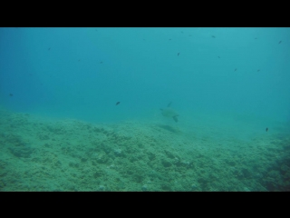 Diving in Turkey