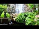 Bella Música Zen y Sonidos de la Naturaleza-Quitar el Estrés y Descansar la Mente-Meditar-Spa-yoga