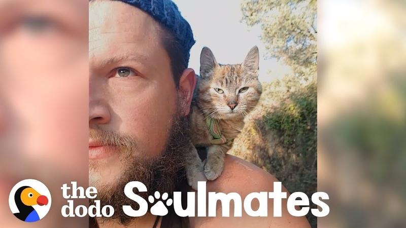 Guy Biking Across the World Picks Up a Stray Kitty The Dodo Soulmates