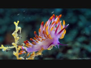 Saturation colorful marine creatures from indonesia the philippines