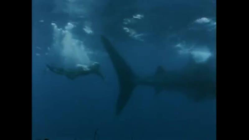 жак кусто подводная одиссея