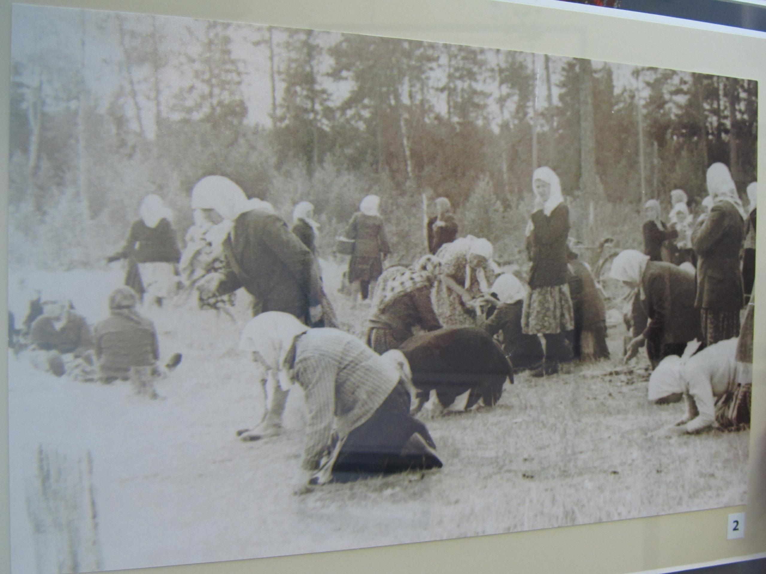 женщины и бабушки (старообрядцы) собирают ягоды и молятся