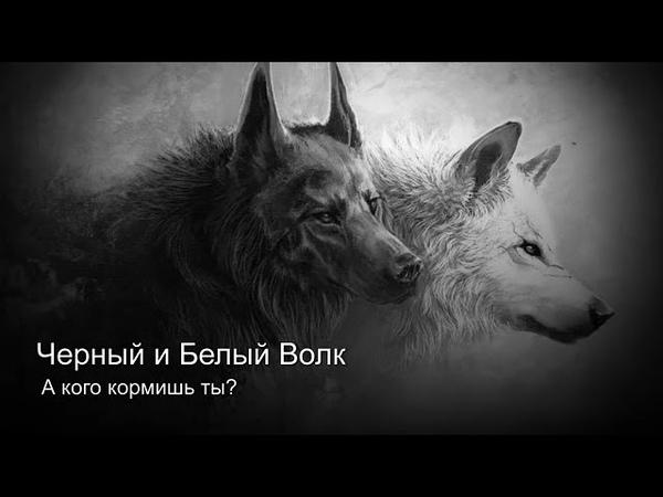 Песня про Белого и Чёрного волка