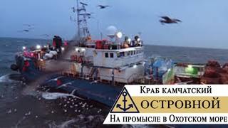 Краб камчатский – На промысле в Охотском море