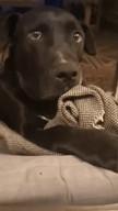 id_4867 Я слышал, что соседская собака беременна! Ты не в курсе от кого?