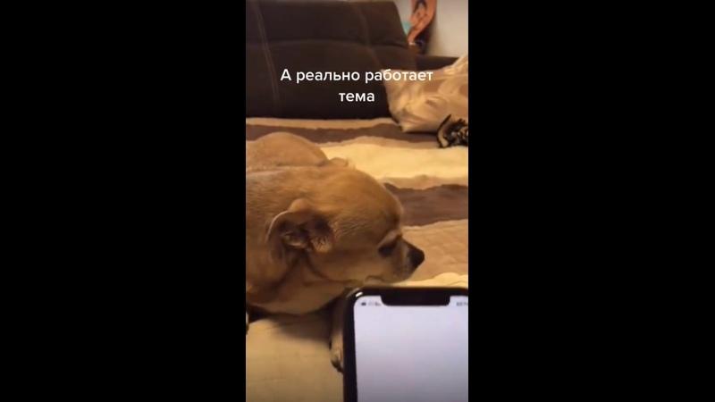 Переводчик с человеческого языка на собачий