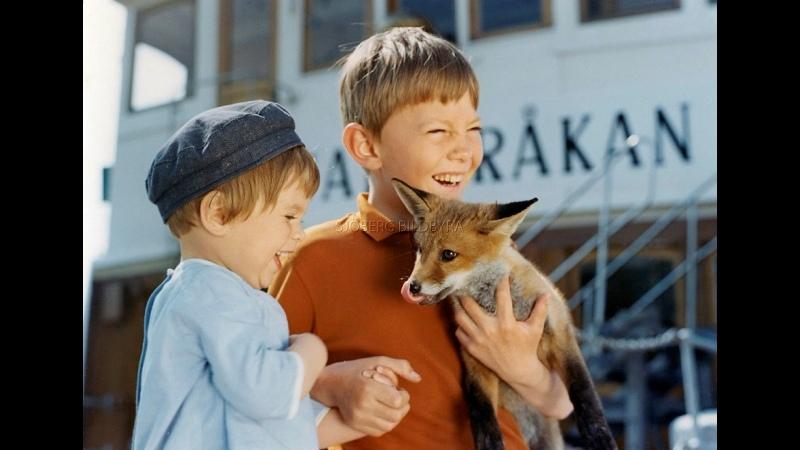 На острове Сальткрока Червен и Крикуша 1965