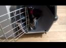 Маленькие котята 15 мес ищут свои дома