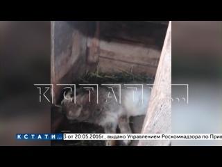 Жители Выксунского района напуганы нападением неизвестного трехпалого зверя - подозревают Чупакабру