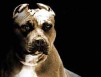 Смешные собаки (110 фото) | 152x200