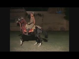 Танцующий боевой конь марвари