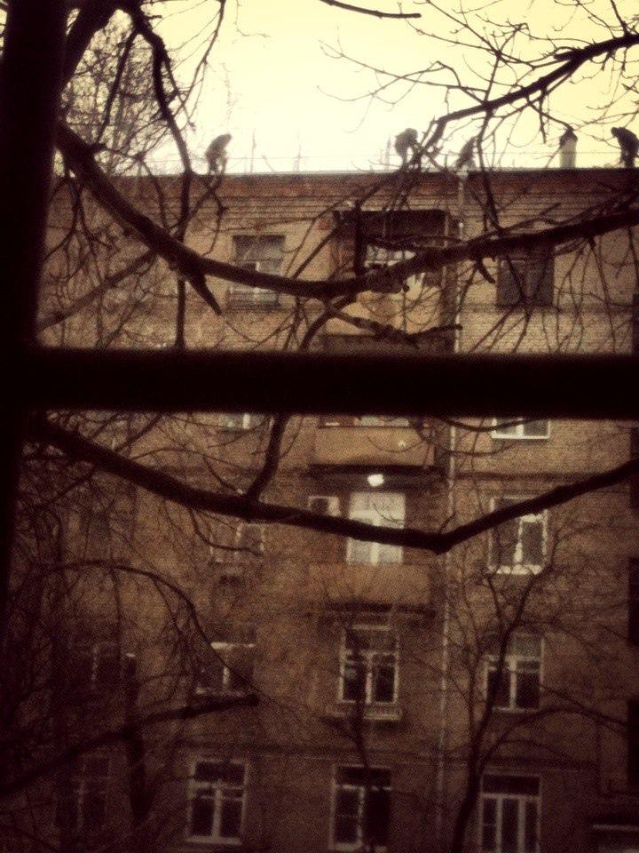 фото из альбома Павла Максимова №2