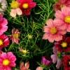 Florets.ru - сообщество садоводов и цветоводов!