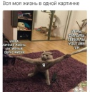 Личный фотоальбом Карины Кот