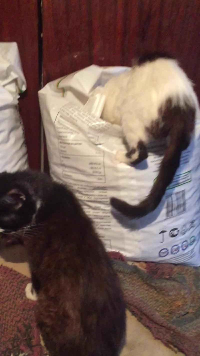 Коты воруют собачий корм!