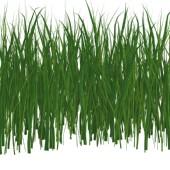 Оценка зеленных насаждений