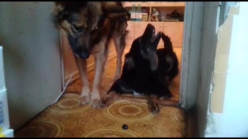 Самый лучший пес Макс не знал что такое маслины А я их люблю Он ее мучил маленькую маслинку Я ее спас И съел