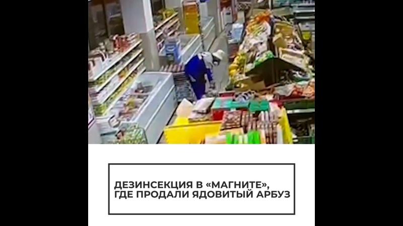 Дезинсекция в Магните где продали ядовитый арбуз