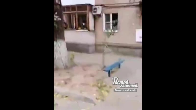 В Азове дерево упало на машины и людей 30 9 2020 Ростов на Дону