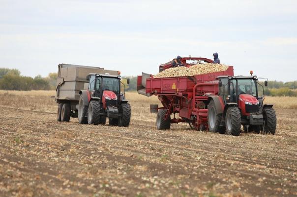 С полей Оренбуржья убрано более 35% овощейПо данны...
