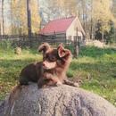 Фотоальбом Gosha Kopilov