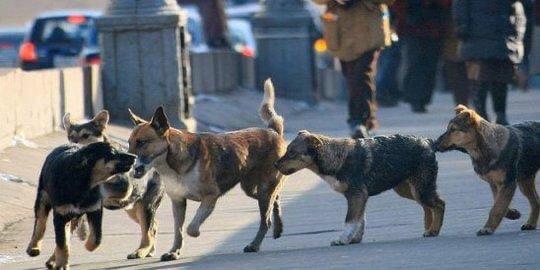 Сызрани потребуется исполнитель на отлов 325 собак...