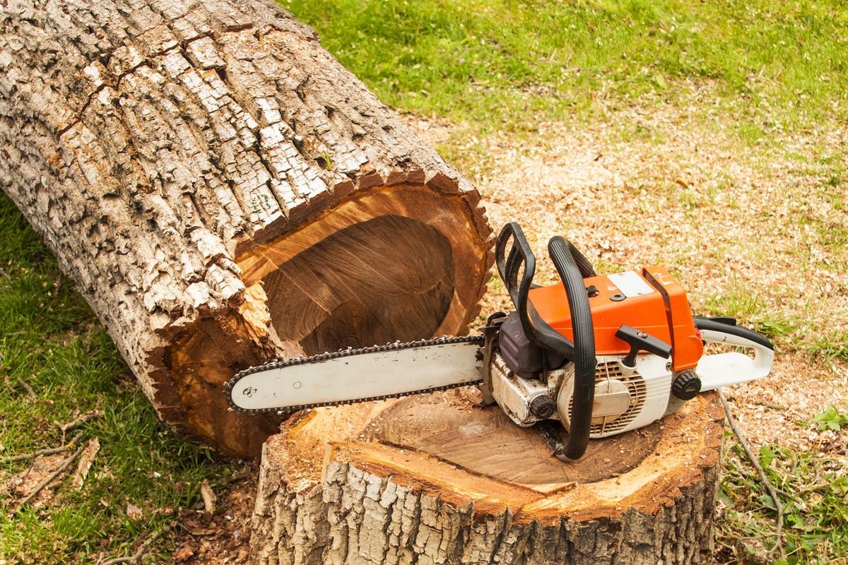 Служба вырубки деревьев СПБ